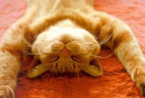 Пятничный кот